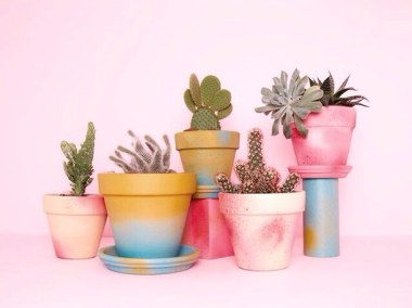 beautiful-cactus-colourful-cute-Favim.com-2698347